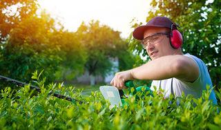 Quelles sont les règles de voisinage qui s'appliquent à vos arbres et plantations ?